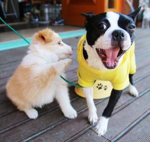 Esokabat kutyaknak